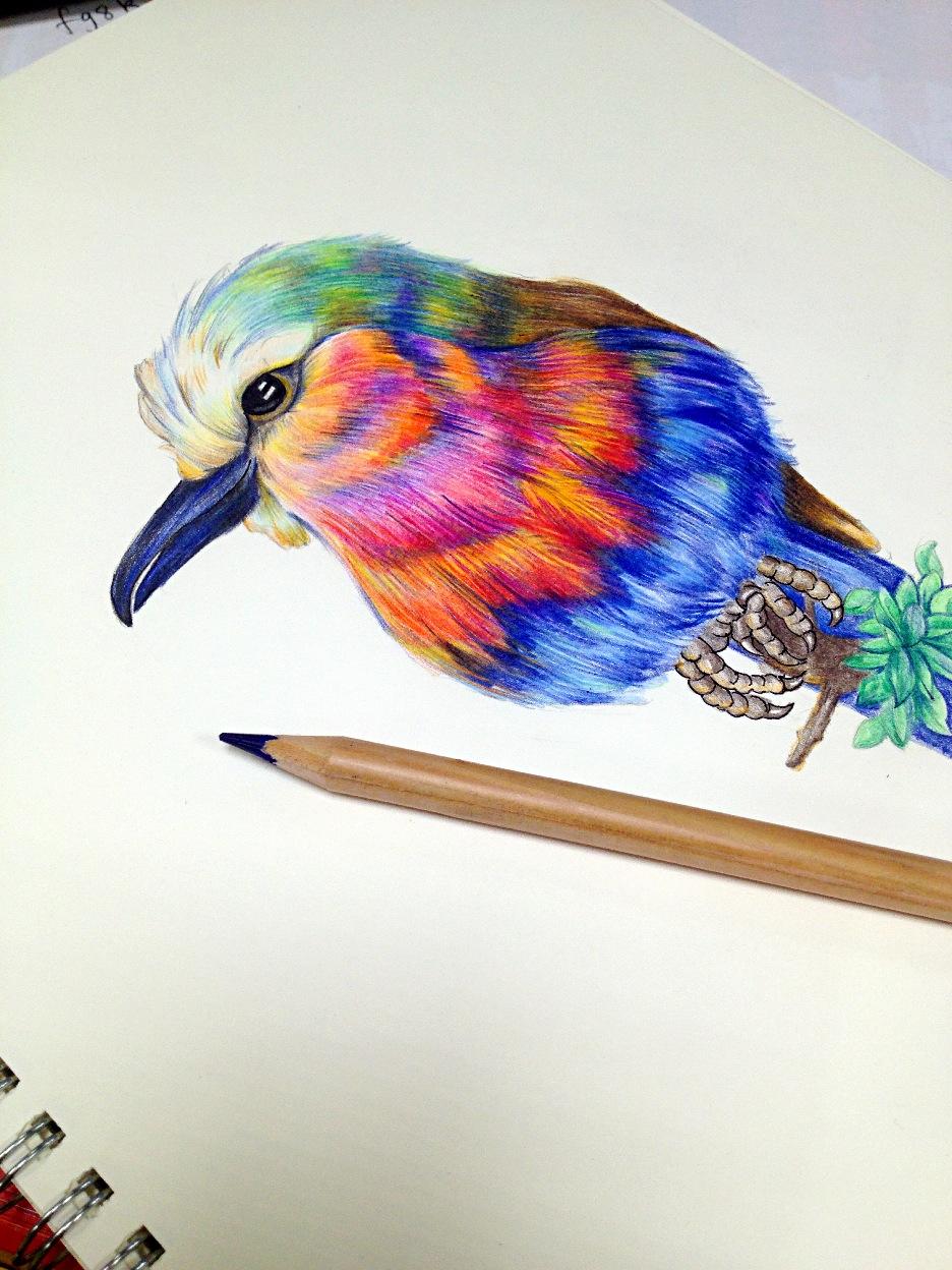 彩铅 鸟 手绘