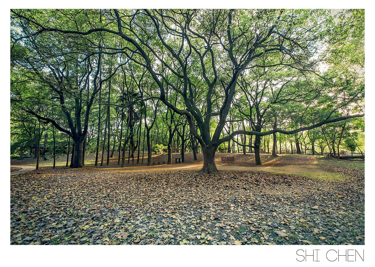 森林公园 摄影 风光 zhzxsc - 原创作品 - 站酷