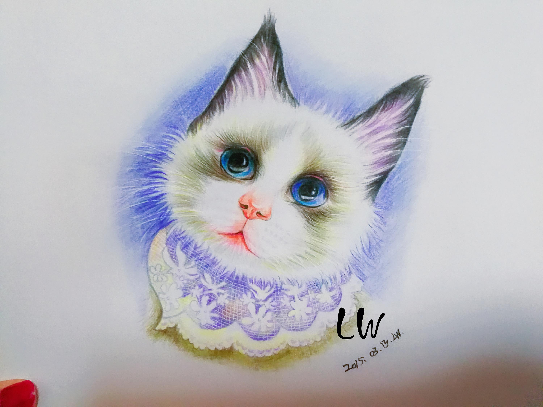 手绘彩铅小猫咪