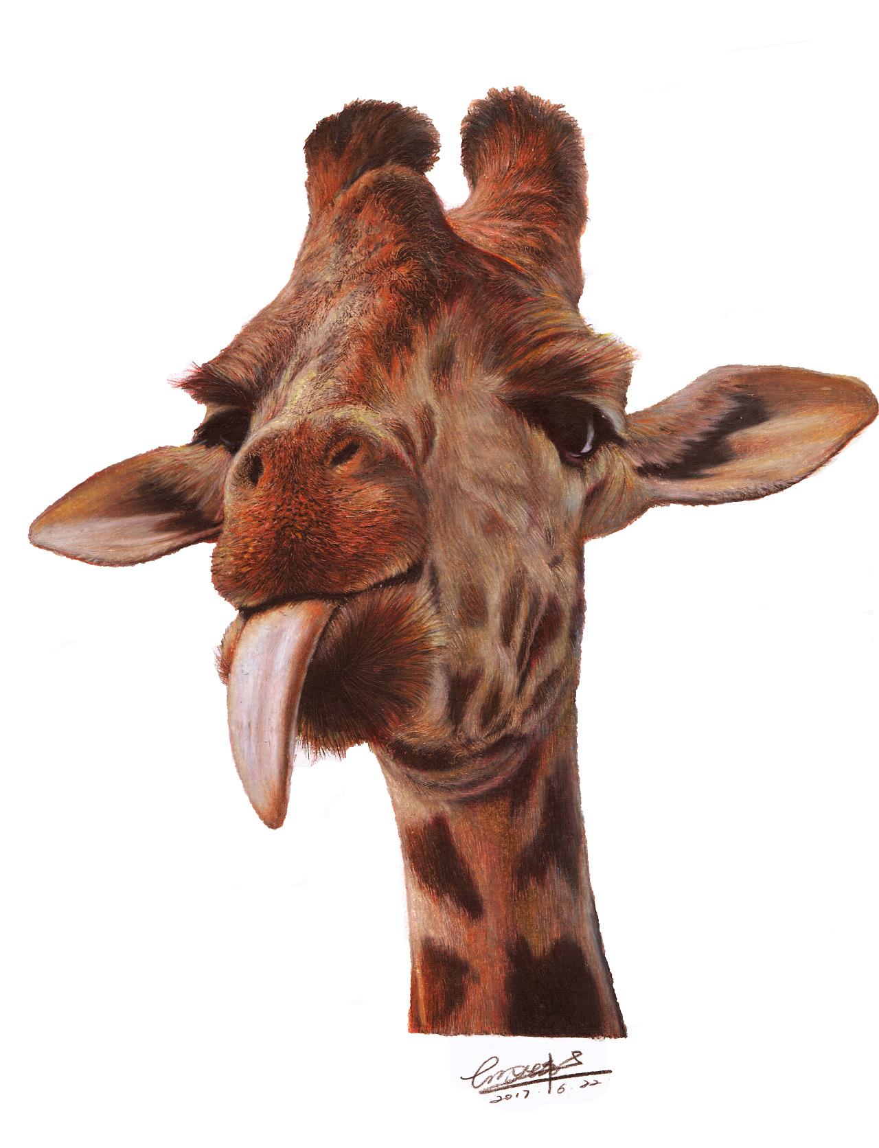 长颈鹿彩铅画_彩铅画《长颈鹿》|纯艺术|彩铅|绘夫美术胡说胡画 - 原创作品 ...