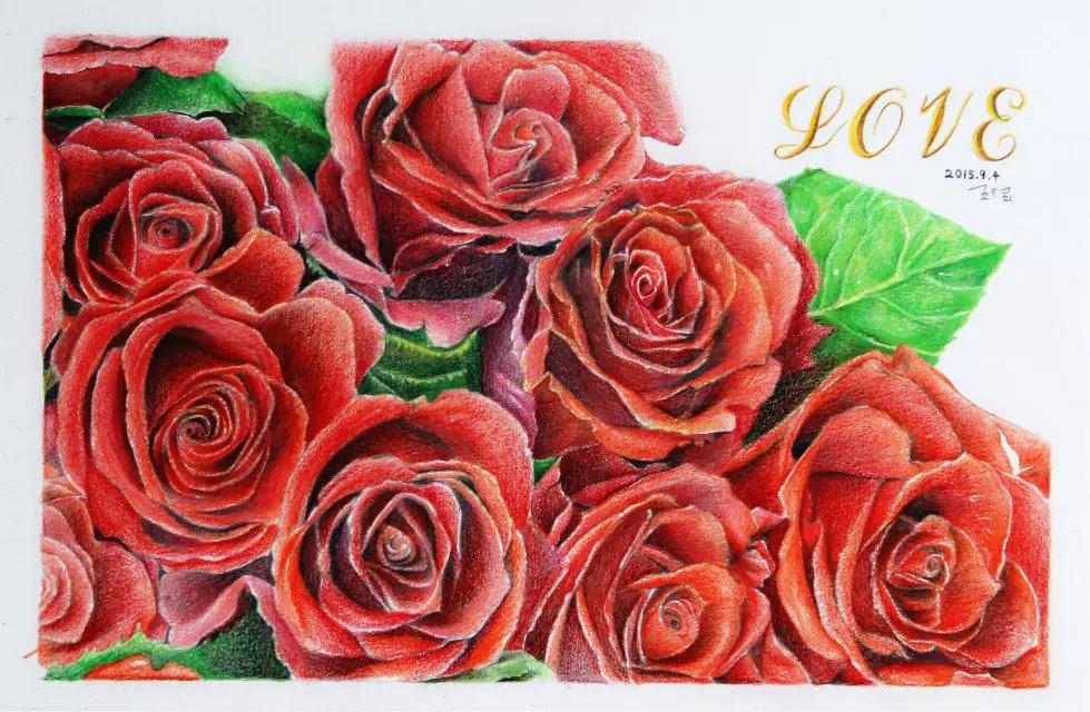 彩铅习作《玫瑰》|纯艺术|彩铅|天宝手绘 - 原创作品