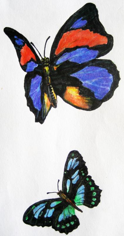 手绘小作-蝴蝶|涂鸦/潮流|插画|小暖鱼
