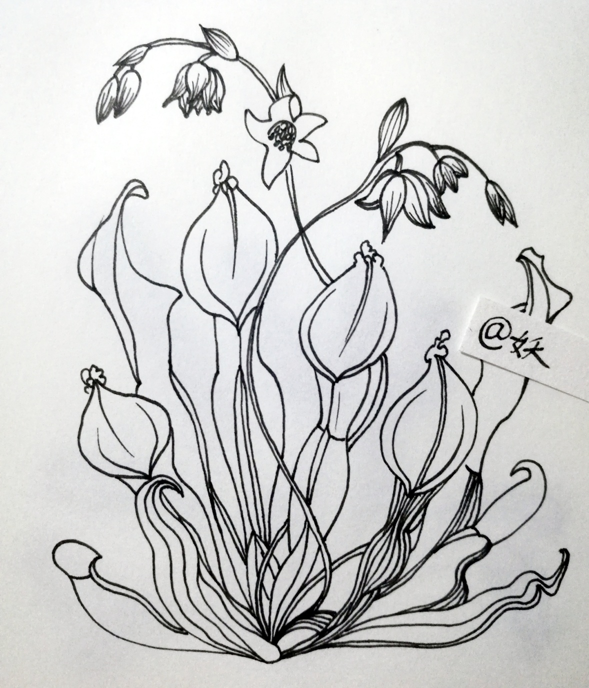 线描植物 纯艺术 钢笔画 十月妖妖 - 原创作品 - 站酷