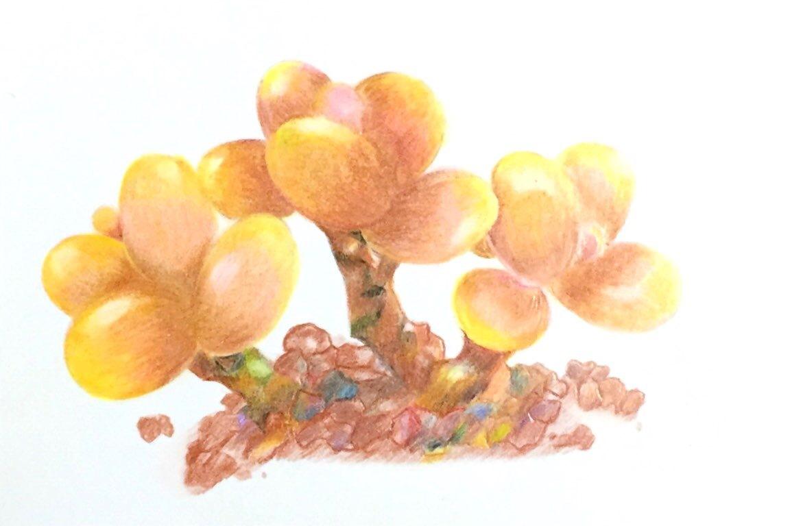 初次多肉彩铅手绘|插画|插画习作|大胖纸的小零食