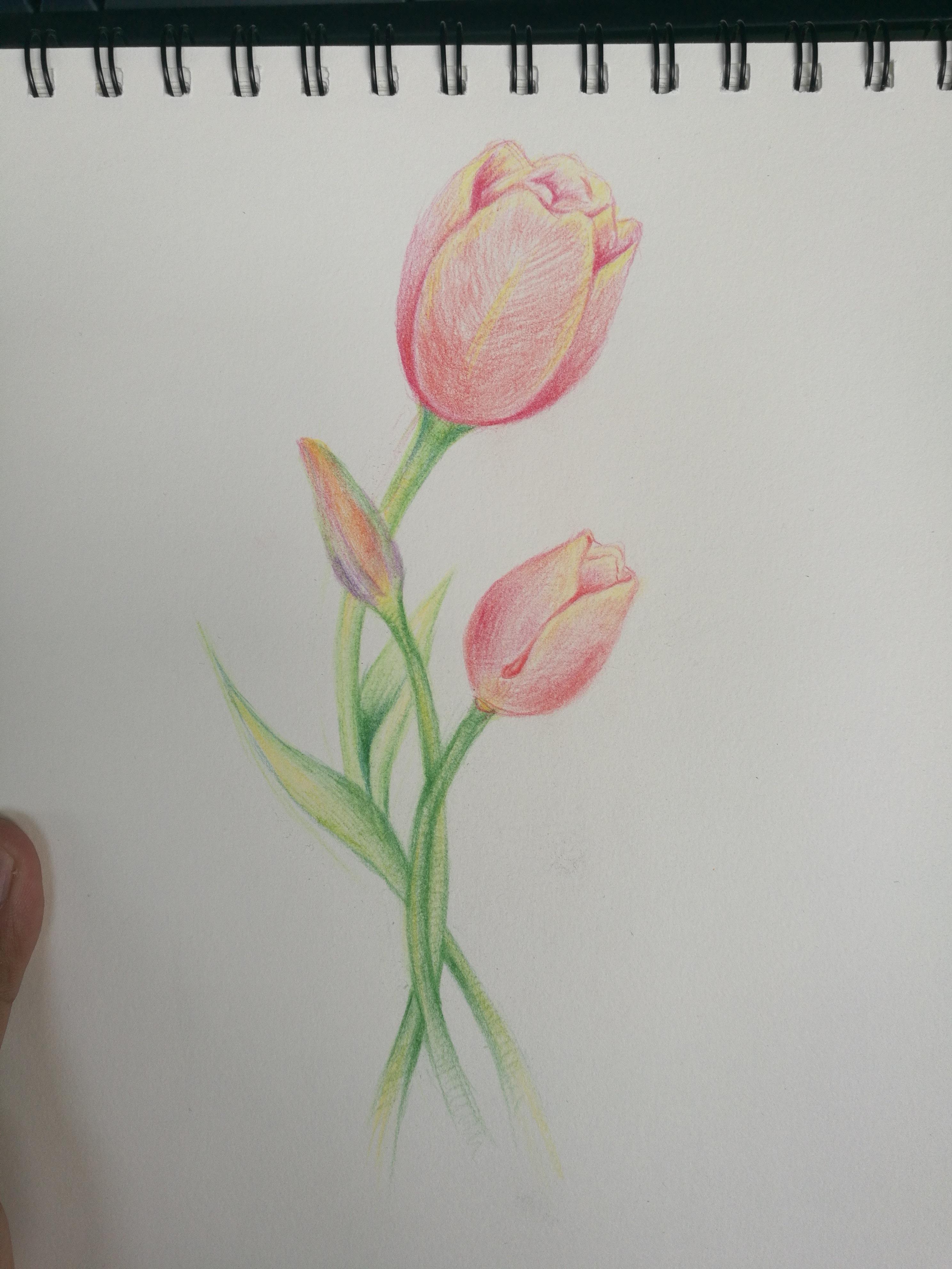学学画手绘