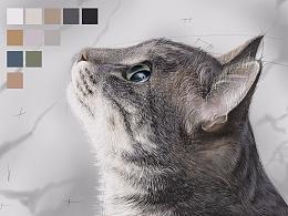 蓝铅笔 | 写实猫咪 步骤分解
