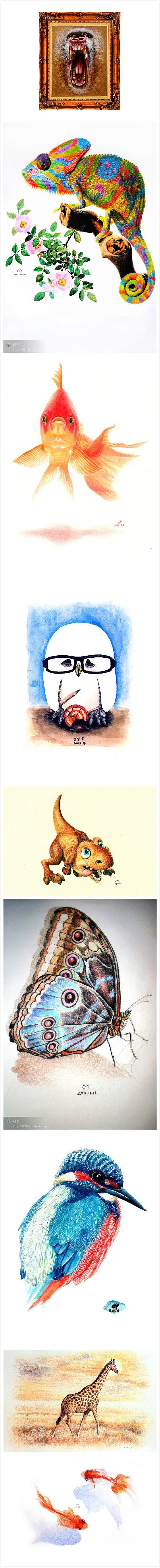 OY手绘:各种技法、各种工具、各种风格表现各种动物、各种爱。(粗略整理2010-2015年OY画笔下的动物) #钢笔画# #圆珠笔画# #彩铅画# #CG插画# #木板画# #水彩# #版画# #写实# #甩墨# #速写# @欧阳鹏杰-OY