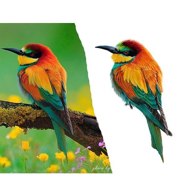 手绘板--鸟