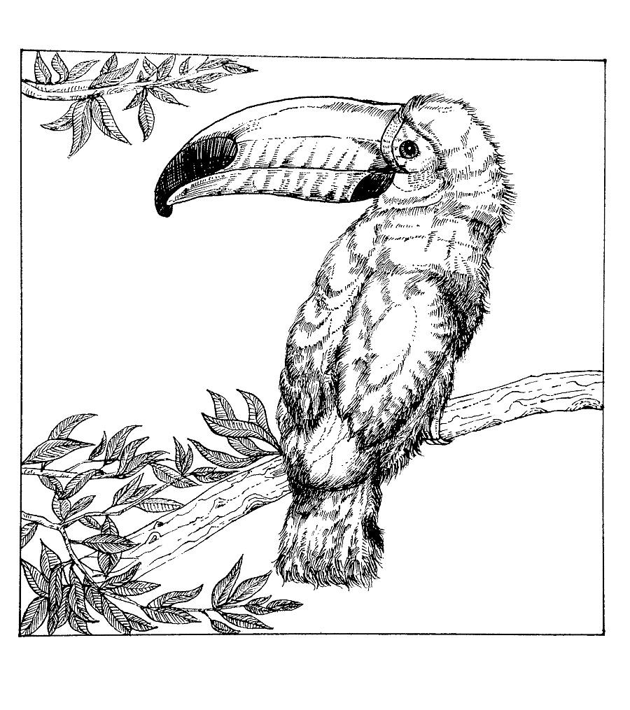 黑白插画-大嘴鸟|钢笔画|纯艺术|马玉亭 - 原创设计