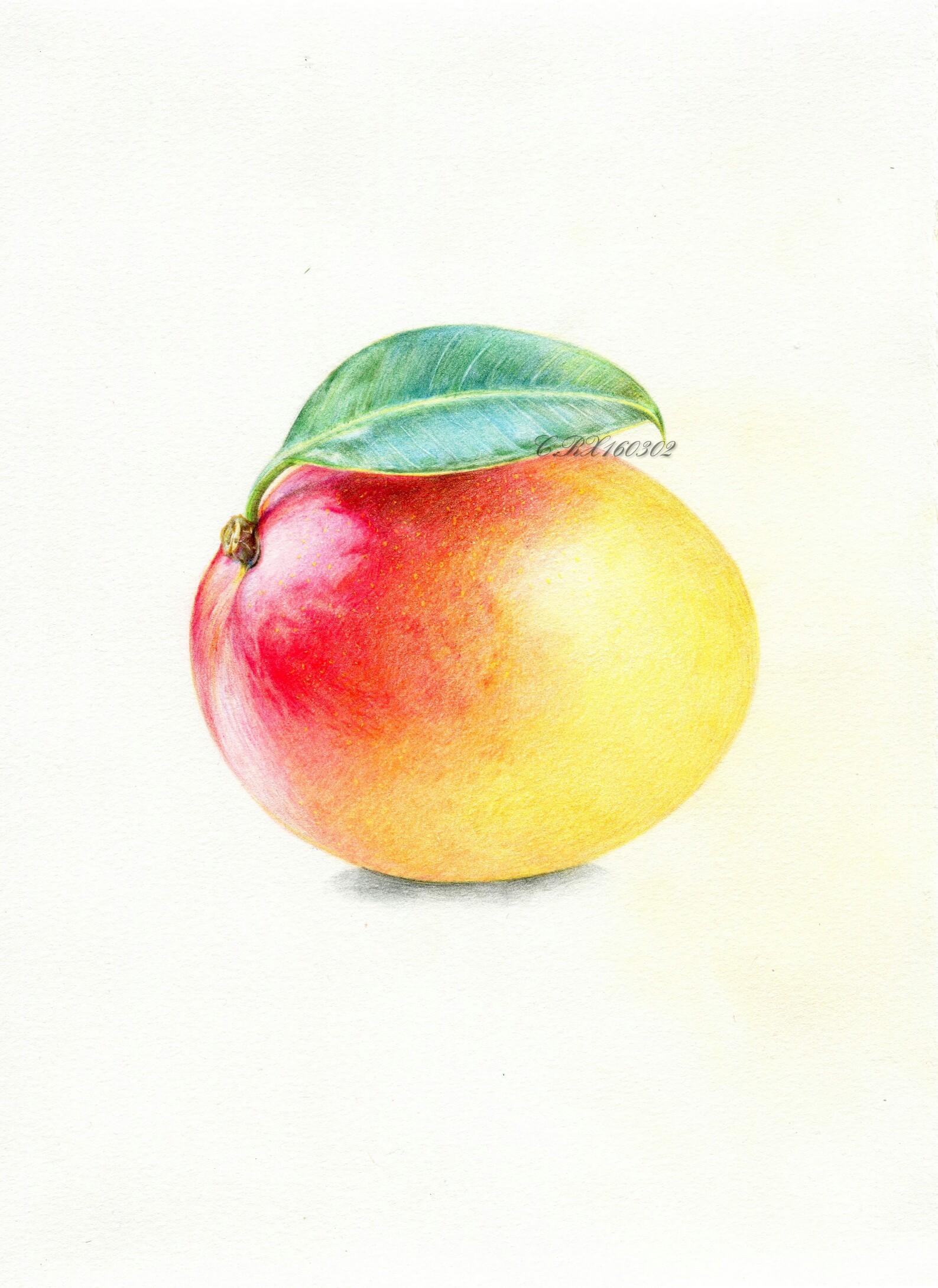 【彩铅水果】澳芒