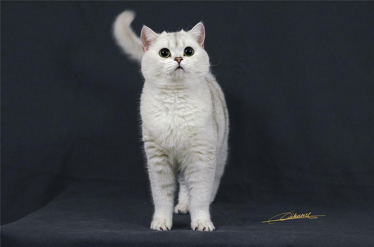 猫儿们萌萌哒|摄影|动物|奇幻猫的猫儿们 - 原创作品
