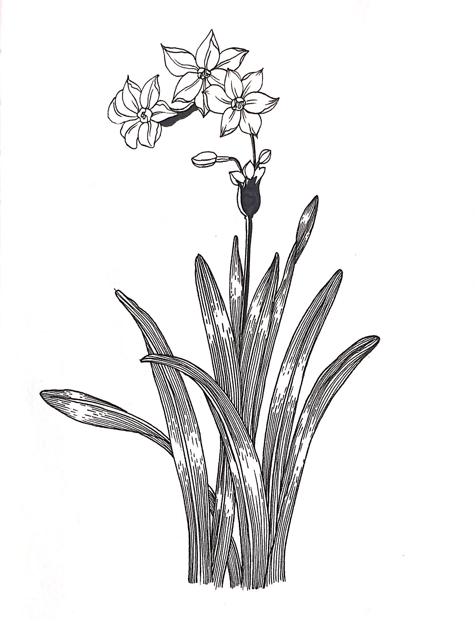 植物线描画装饰画分享展示
