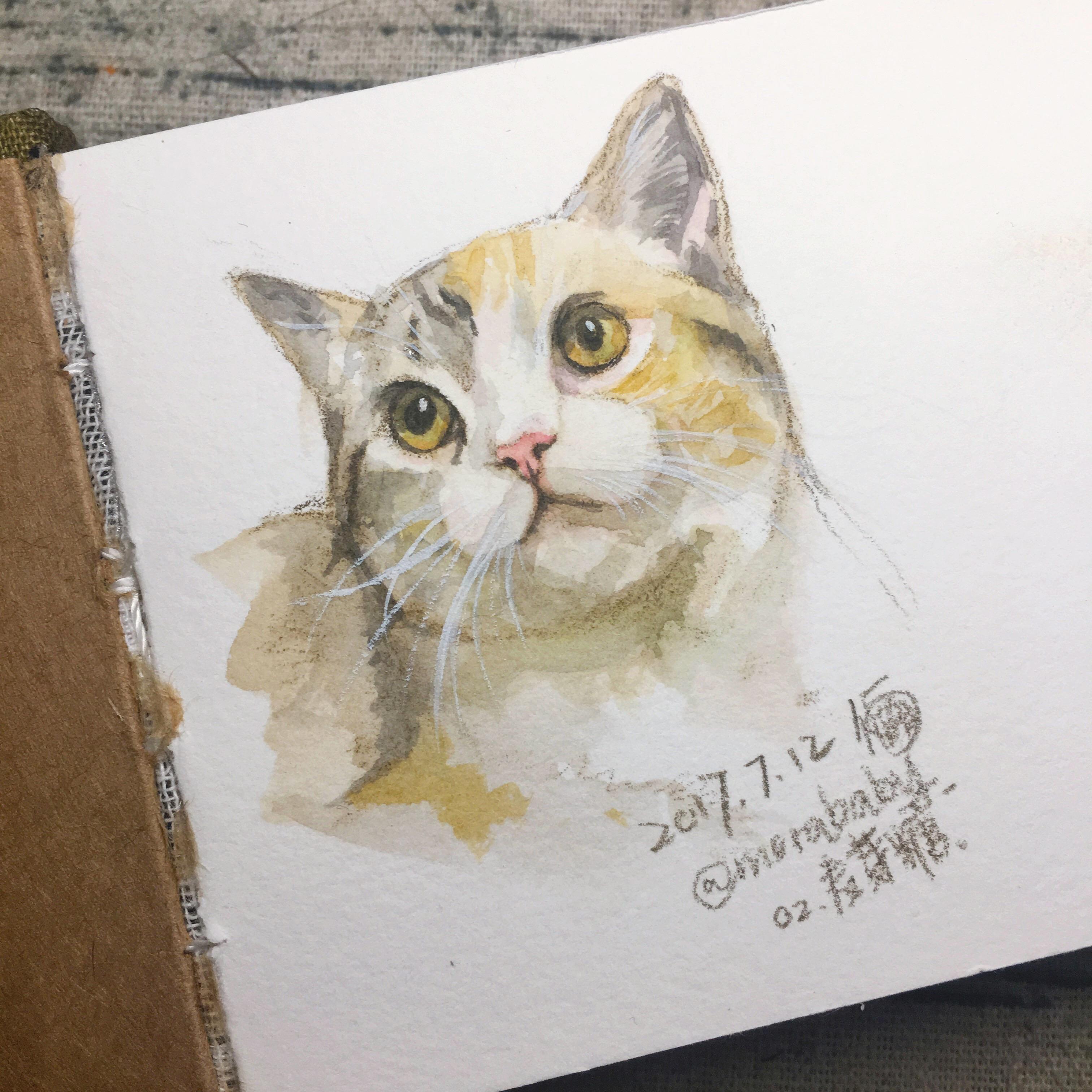 壁纸 动物 猫 猫咪 小猫 桌面 3024_3024