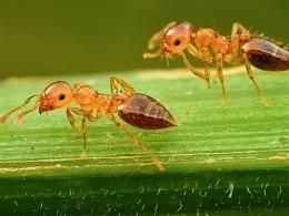 一组2mm左右的小蚂蚁