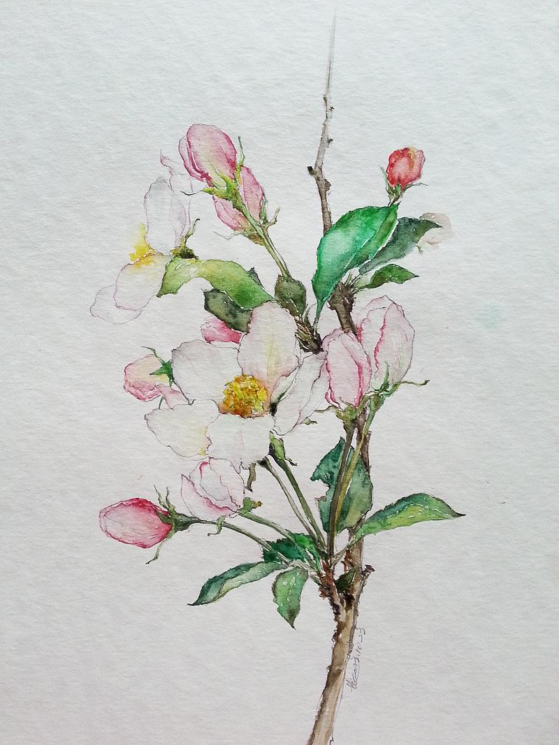 第1期手绘水彩花鸟网络班学员作品