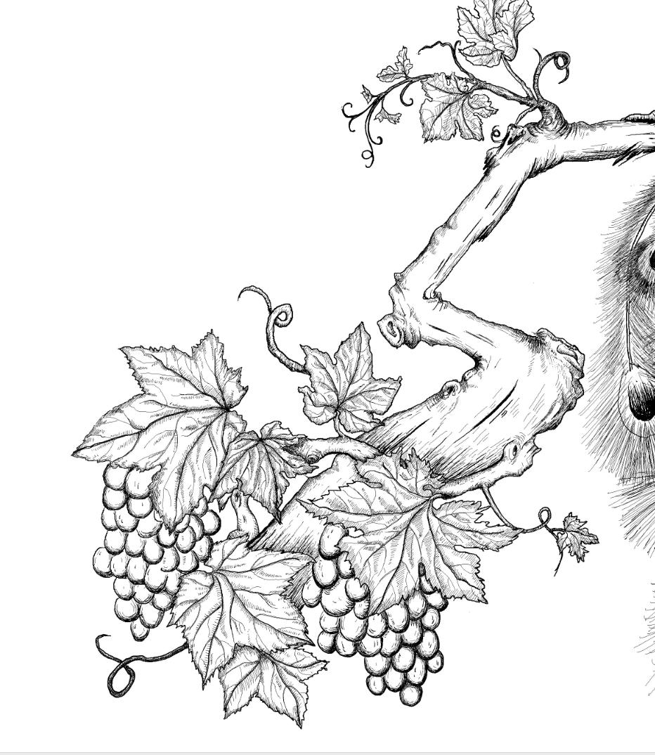 原创作品:华宏手绘 孔雀 葡萄藤 葡萄 红酒酒标|插画