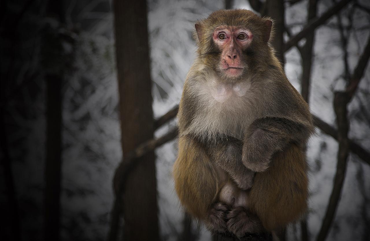 关于,他们|摄影|动物|未央weiwei - 原创作品 - 站酷