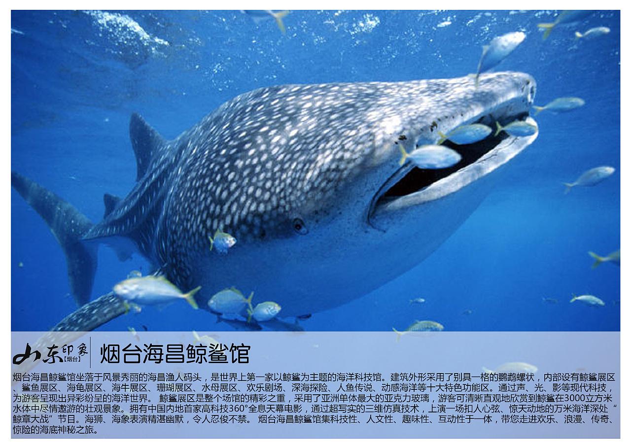 壁纸 动物 海洋动物 鲸鱼 桌面 1280_905