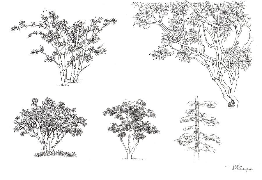 国 景观手绘植物,水景,石头,人物,交通工具,以及平面造型手绘练习大全