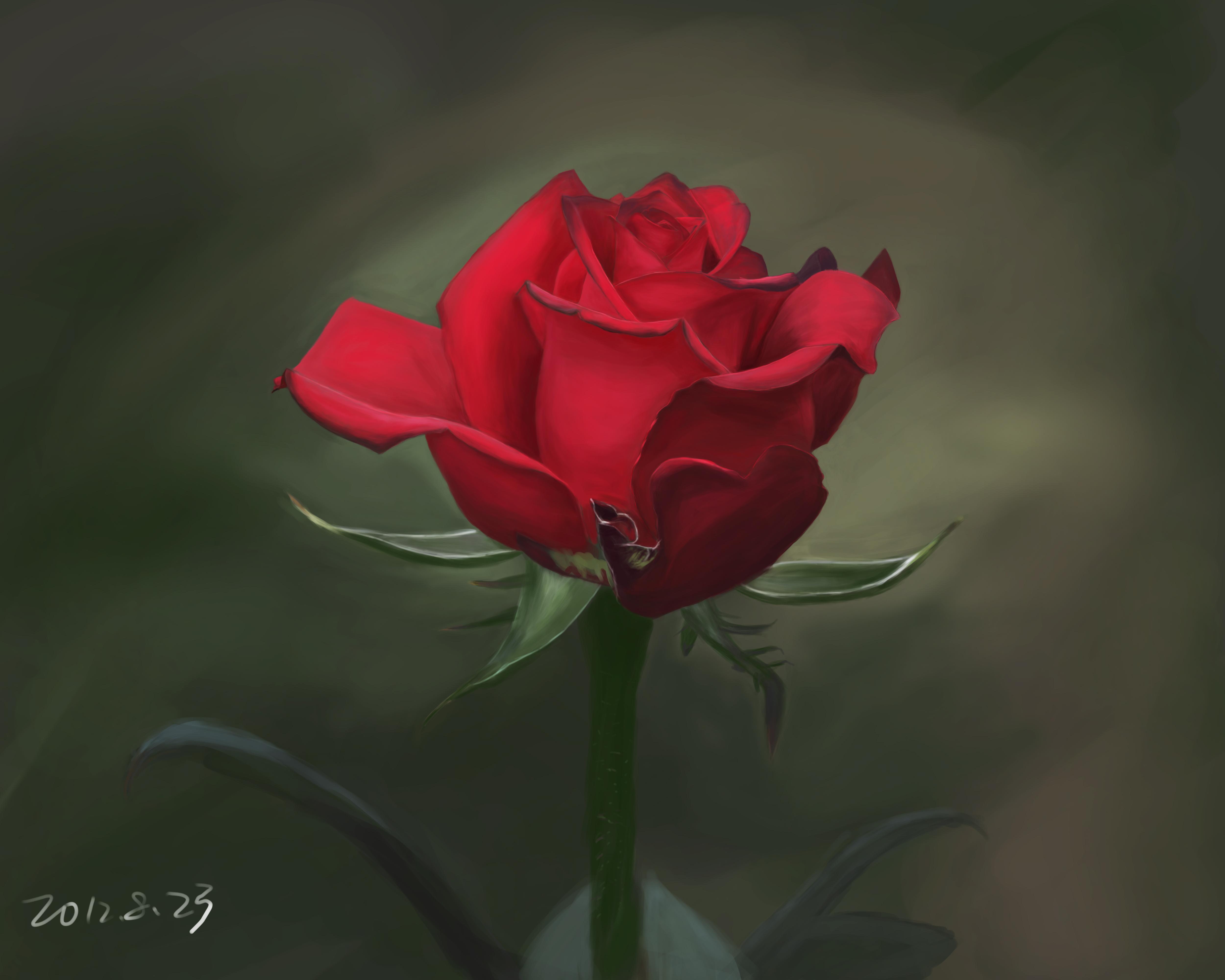 一朵玫瑰是啥意思.