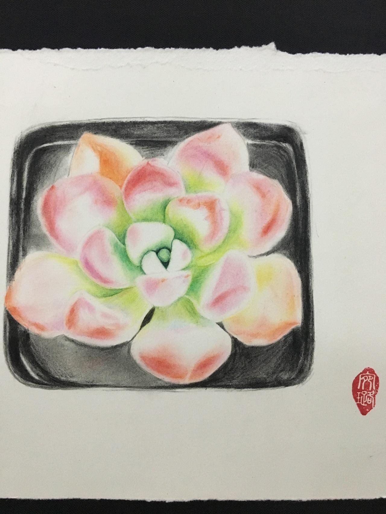 多肉植物|纯艺术|彩铅|鹿小妖手绘 - 原创作品 - 站酷