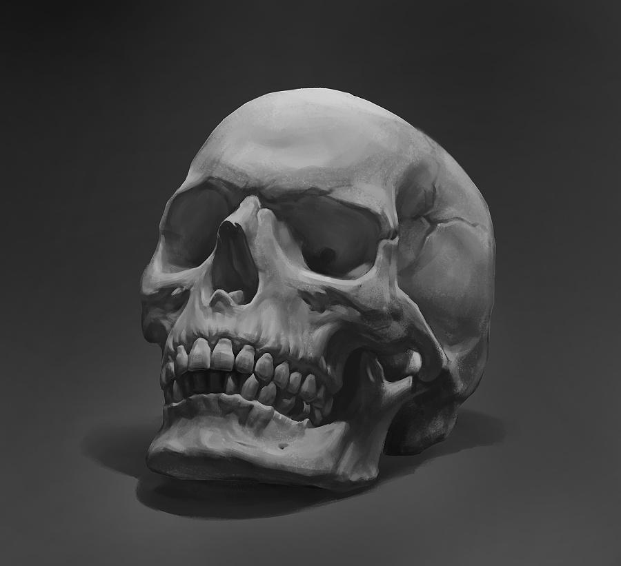 骷髅头骨素描手绘习作