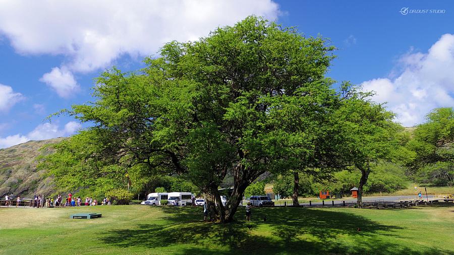 查看《感受温热的风 - 夏威夷小游记...》原图,原图尺寸:1600x900