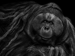 2016~2018动物肖像精选
