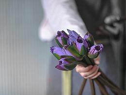 Flower-睡美人