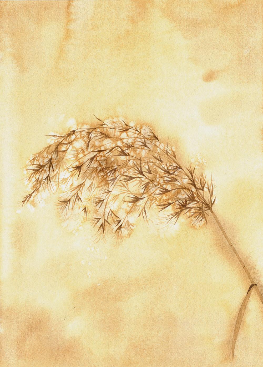 芦苇平面图例手绘