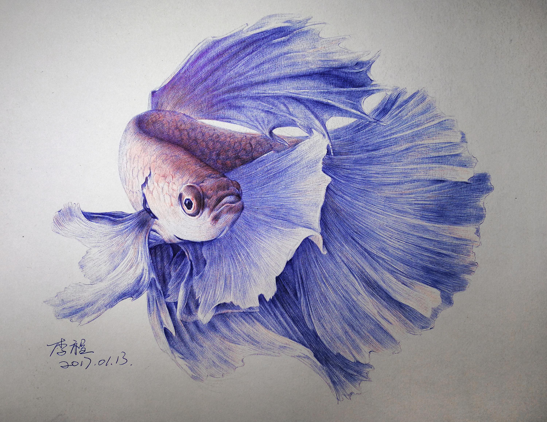圆珠笔画—斗鱼