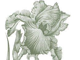 笔记本封面设计(花卉)