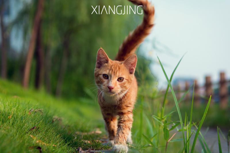 流浪猫|动物|摄影|向镜 - 原创设计作品 - 站酷