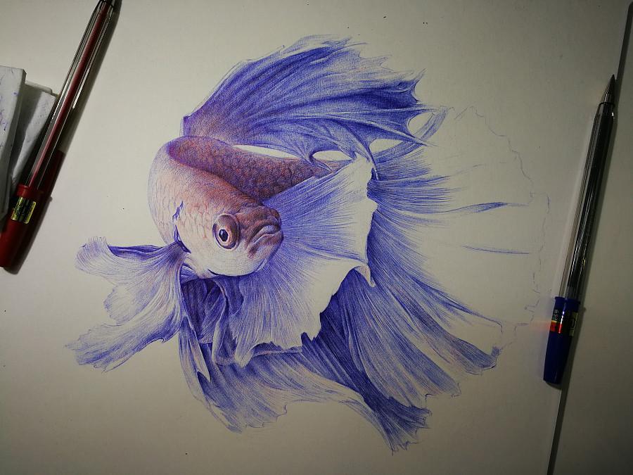 圆珠笔画-斗鱼|钢笔画|纯艺术|李程LcArt - 原创设
