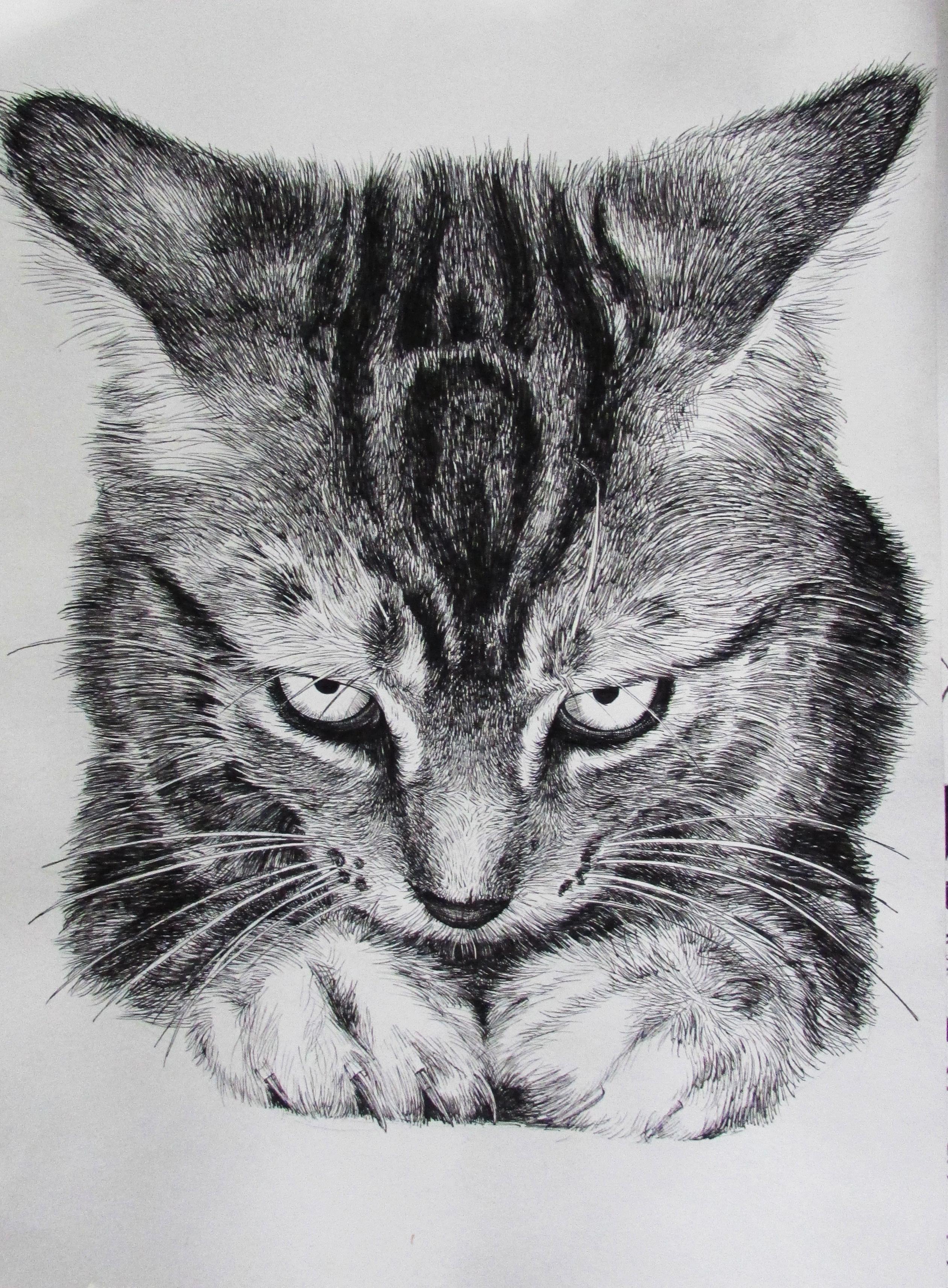 素描手绘画猫咪