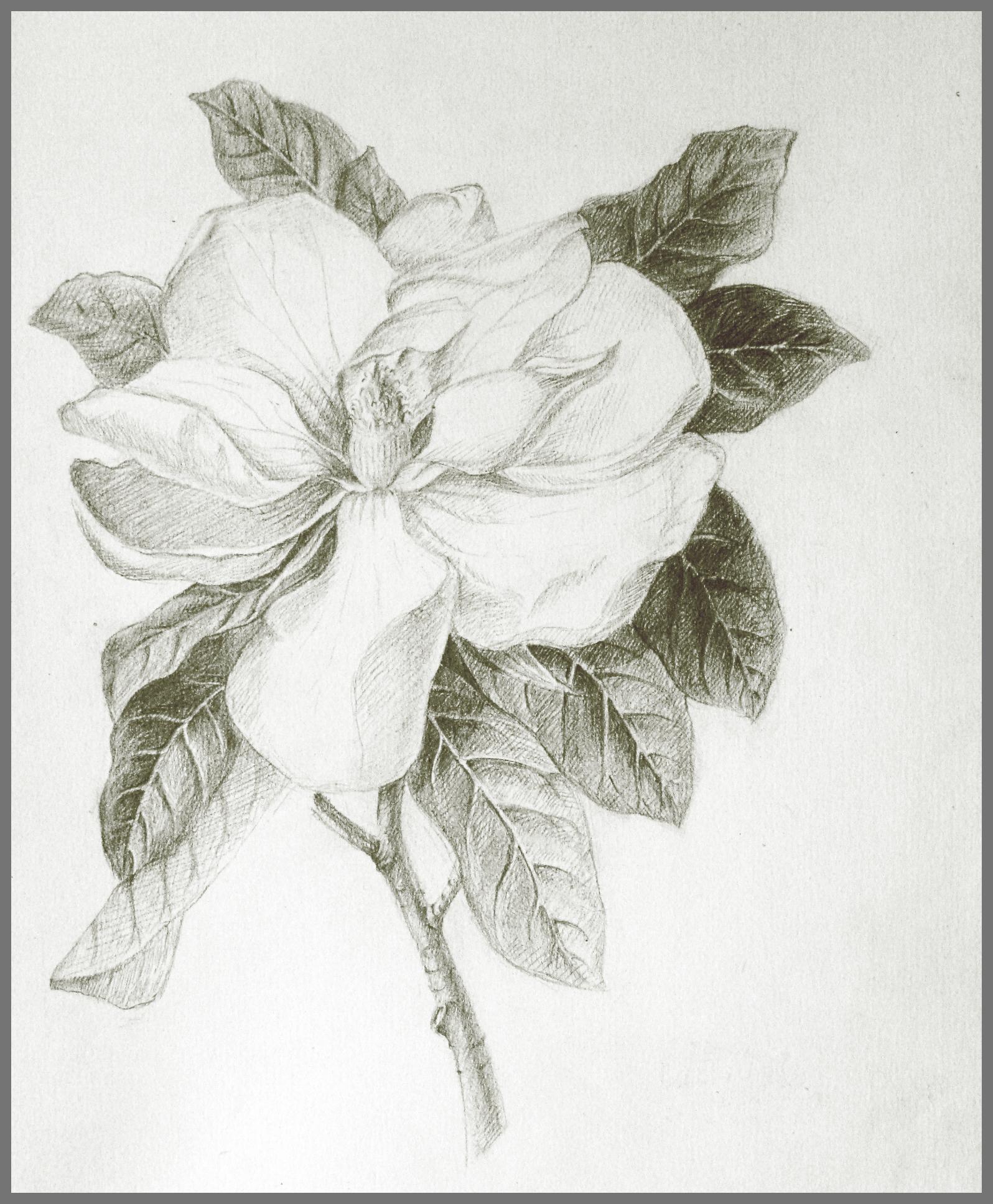 素描花卉图片图片_素描花卉图片图片下载