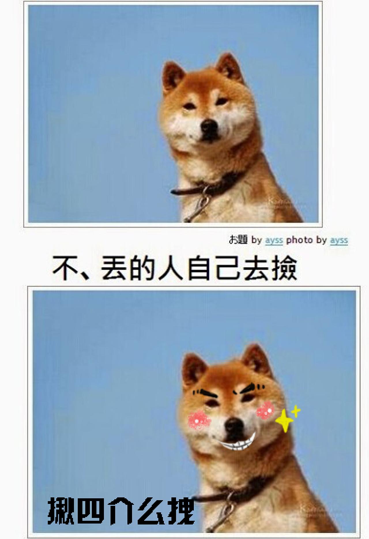 一天在网上看到的图片,一只可爱的秋田犬,表情呆萌的说着,不愿意图片