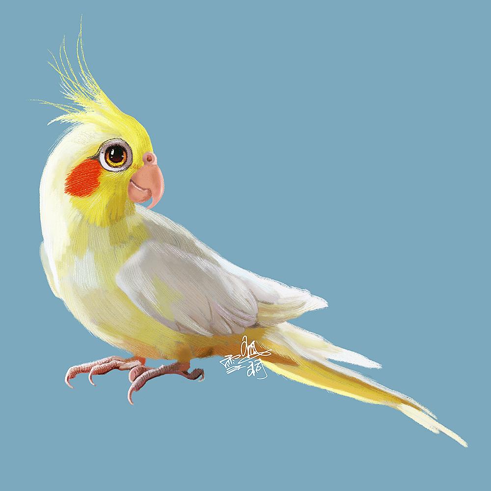 玄凤鹦鹉避暑图片展示搞笑图片手绘的图片