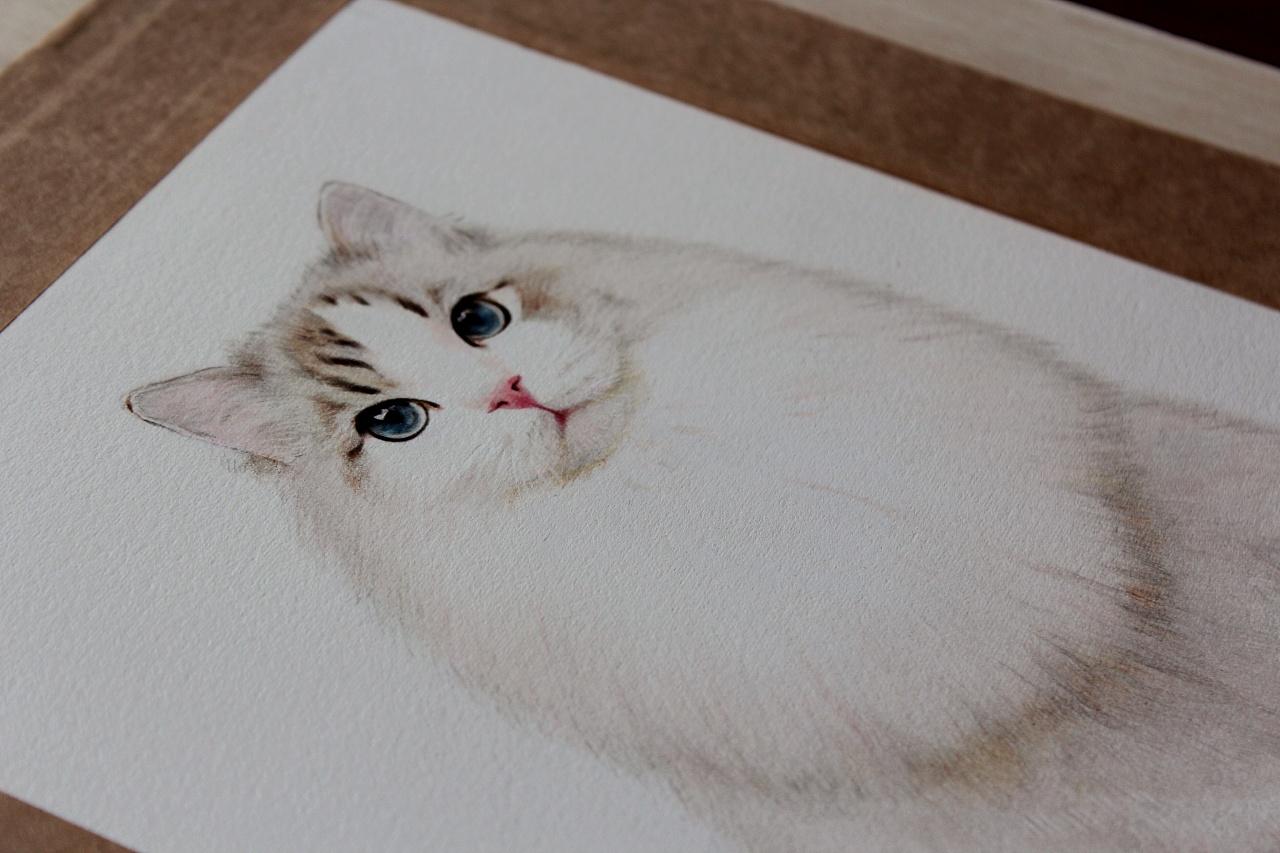 彩铅布偶猫