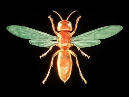 《昆虫志》