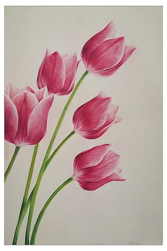 彩铅花卉 |教程,图片尺寸:640×897,来自网页:http://m.sohu.