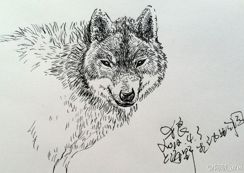 画惯了人,该画画动物.---上海野生动物园-手绘日记