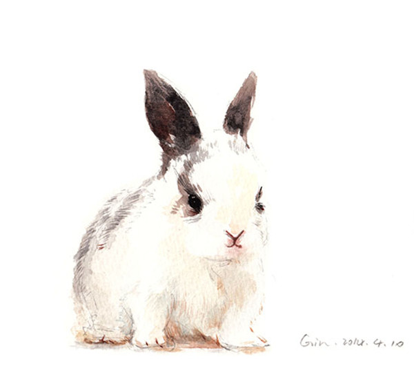 兔子素描-水彩动物