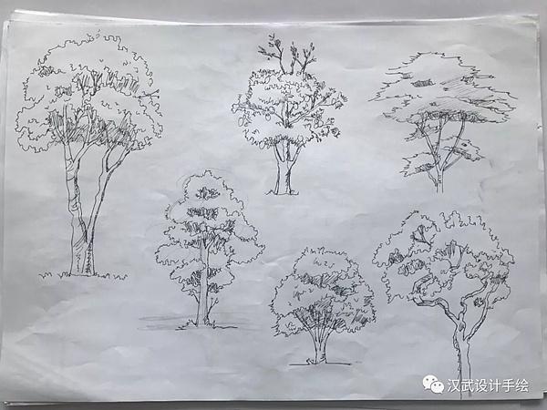 景观设计单体植物小品平面图线稿手绘