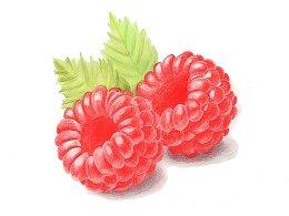 【驴大萌彩铅教程192】手绘浆果 树莓
