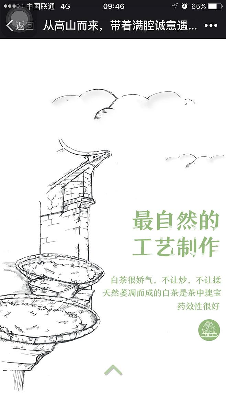 福鼎白茶 手绘 插画 晋峰白茶 h5