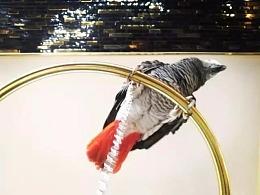 【布道作品】云鸟-空港精英共同体/西金酒店