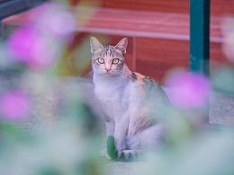 寻猫集98