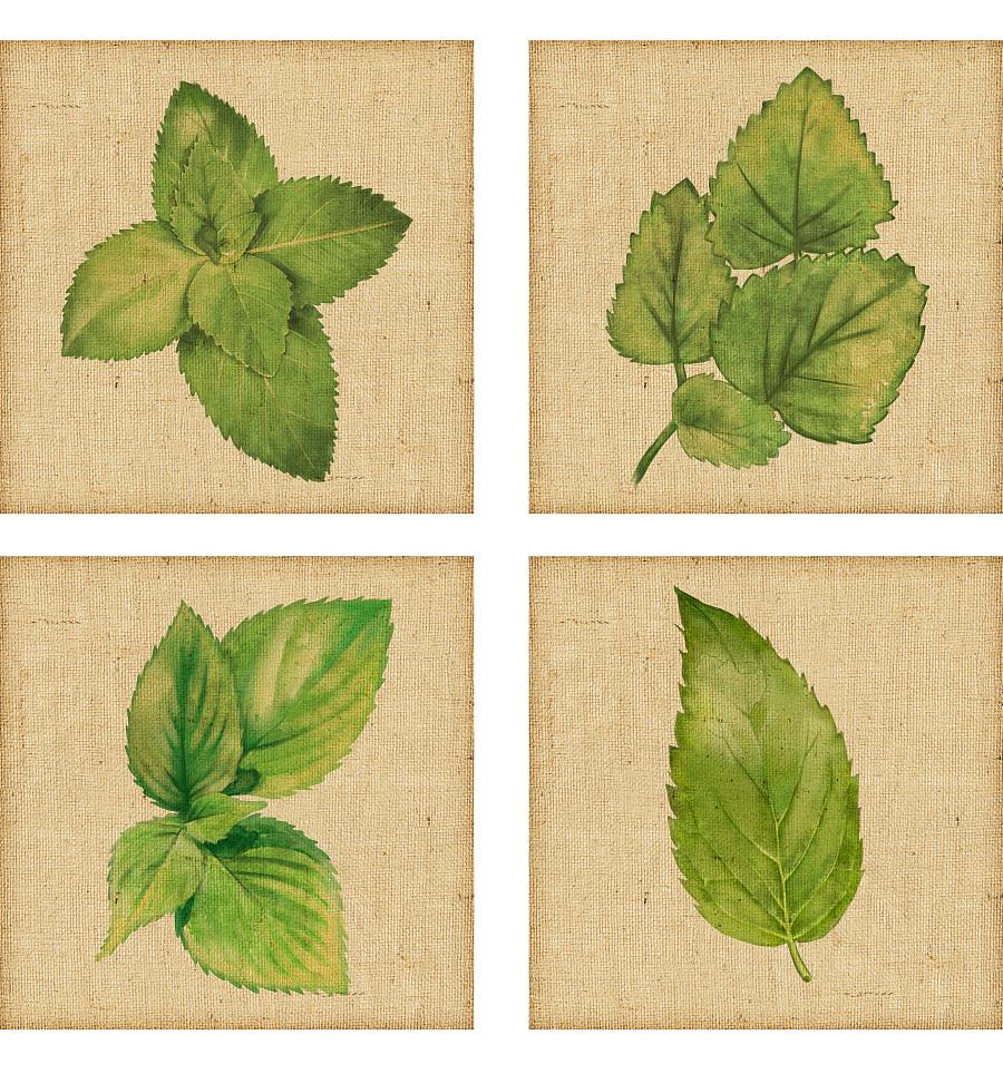 〖植物图鉴〗botany