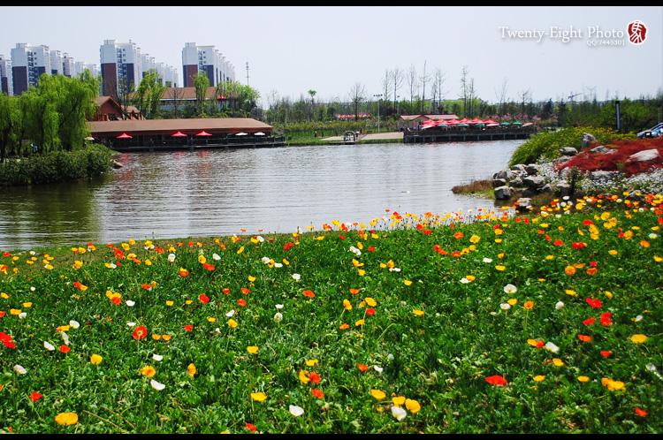 游成都青白江樱花节|风光|摄影|damali